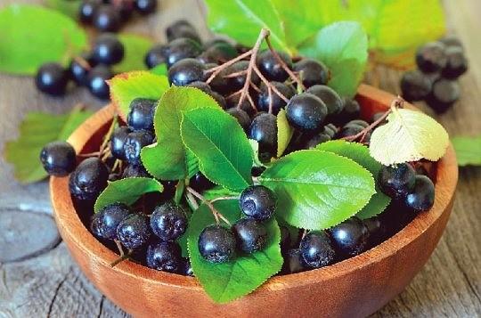 უნიკალური მცენარე წონაში კლების, გულ-სისხლძარღვთა დაავადებებისა და საშარდე გზების ინფექციების წინააღმდეგ!