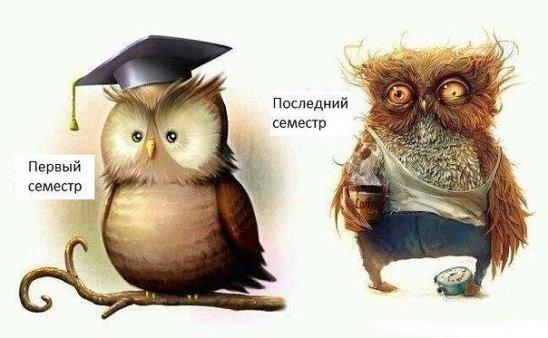 Заказать дипломную курсовую реферат в Саратове ru  diplom64 ru