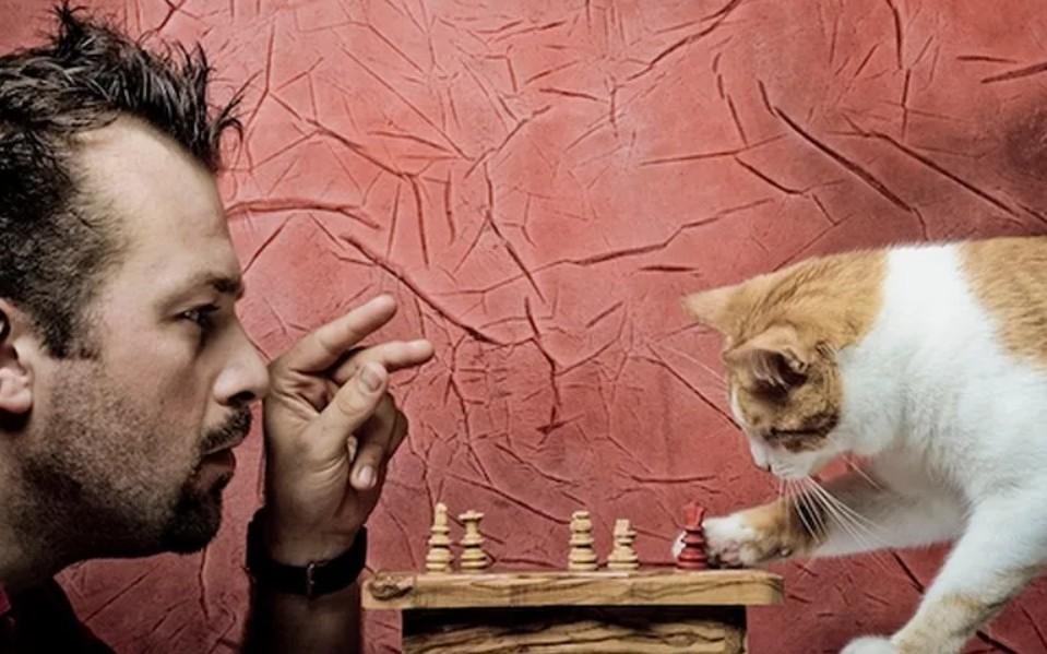 Прикольные картинки кошек и хозяев