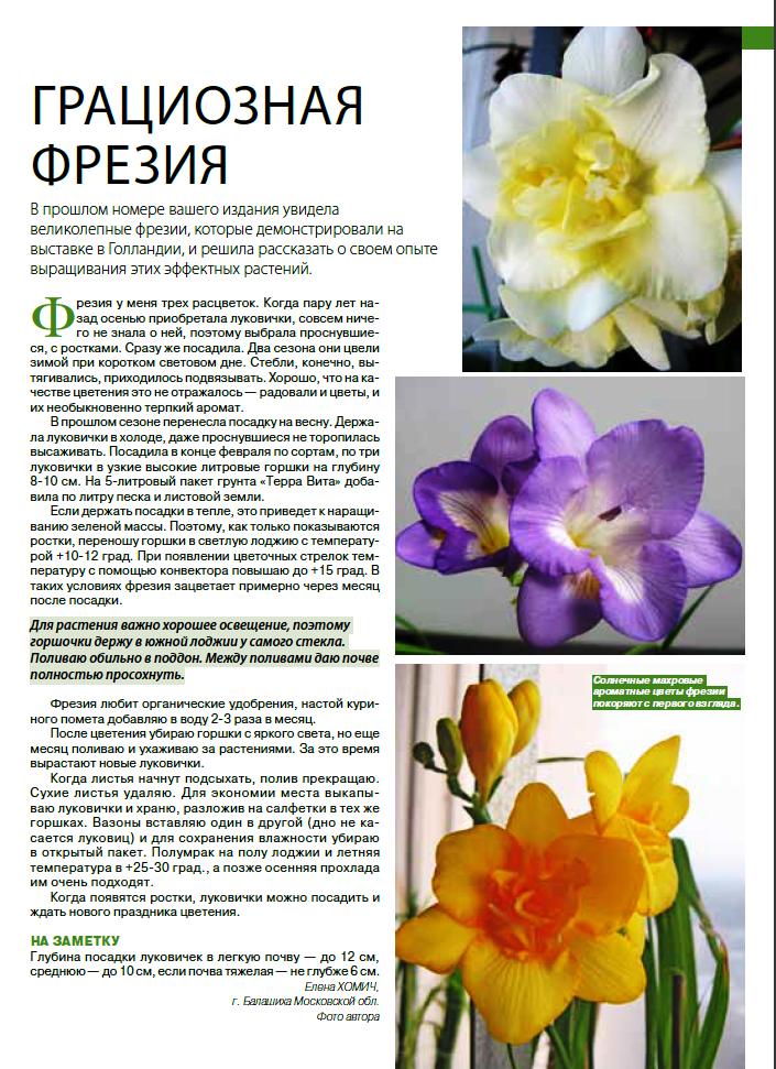 статьи о растениях из  газет и журналов - Страница 7 Image?id=862627812636&t=3&plc=WEB&tkn=*hlYVl247JpGPJa4LHxirO4FTSig