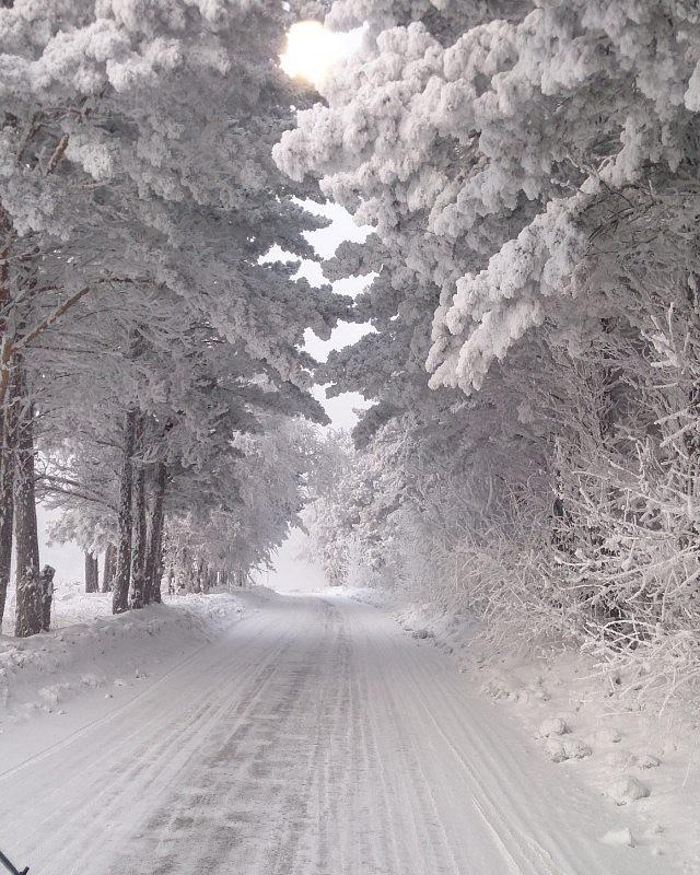 Зимний Вернисаж