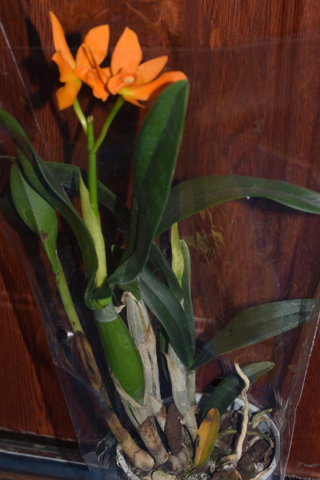 Букет доставка цветов в абакане на дом букет свадебный