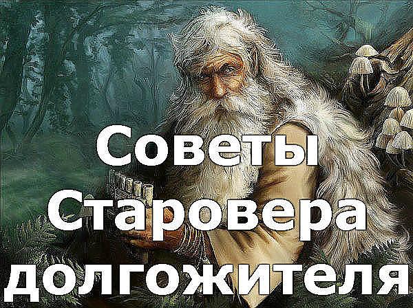 Советы старовера - долгожителя Image?id=863997281372&t=0&plc=WEB&tkn=*NhEAVa5x8kSI5gLQTrunGrQfgE8