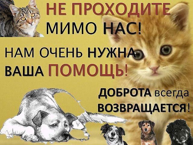Картинки с надписью помоги животными, дня