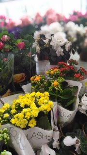 Цветов доставка цветов амурская область город свободный цветов 500