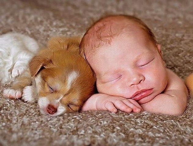 Прикольные картинки про животных и детей, только одна вечная