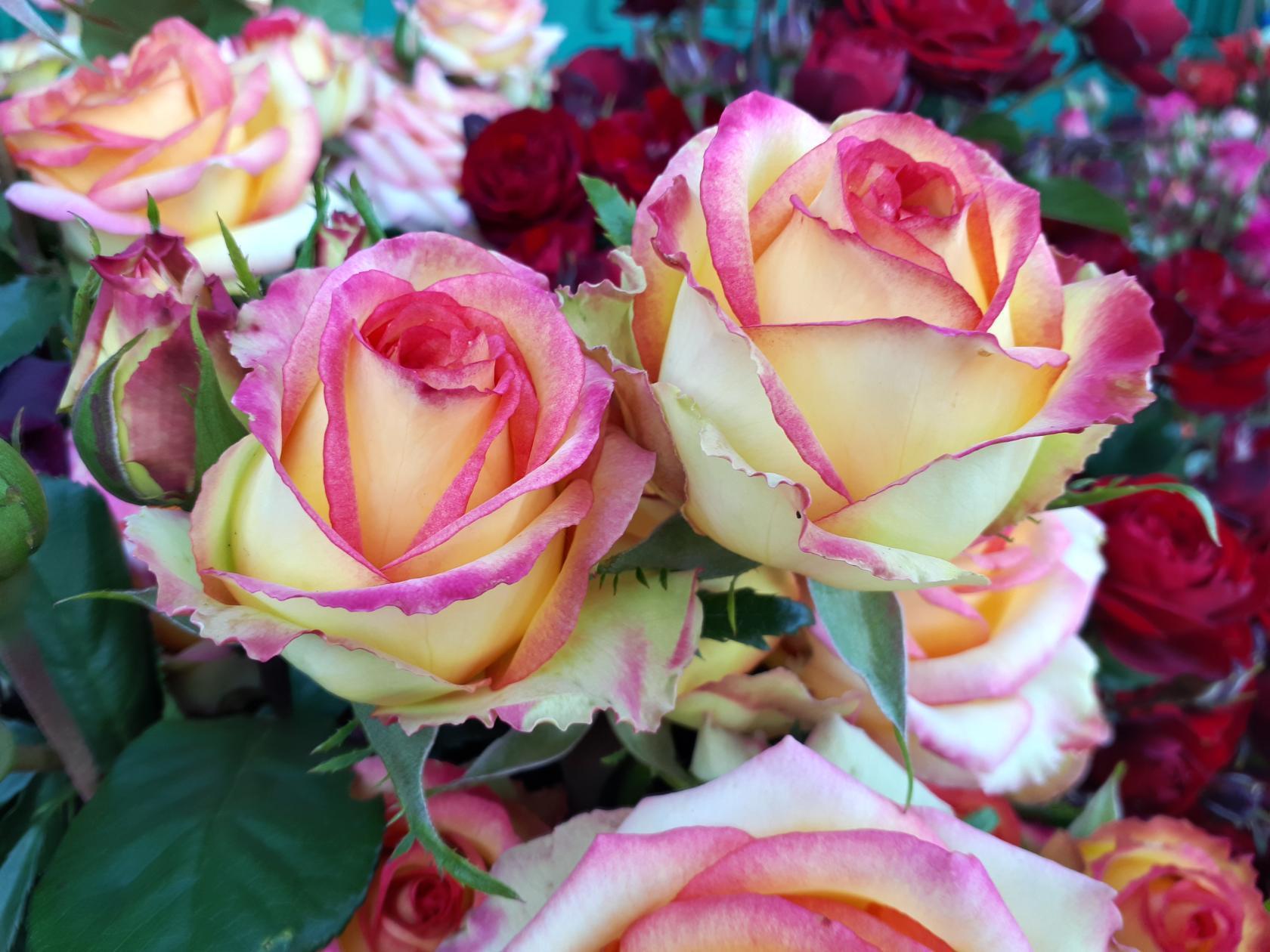 частым картинки роз по почте хорошем техническом состоянии