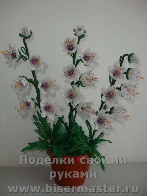 Лесные и полевые цветы Image?id=870884234595&t=3&plc=WEB&tkn=*zy-wy-SRZpvWiQS6QpVz4RhCQPU