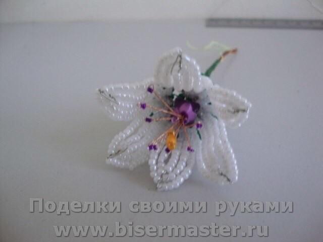 Лесные и полевые цветы Image?id=870884235363&t=3&plc=WEB&tkn=*i__AwAjZReBWsxGbg4J0_R9uhJ8