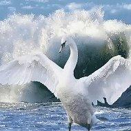ГАЛИНА Лебедь