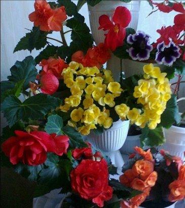 Почему погибают комнатные цветы купленные в магазине, цветы купить в кредит телефон через интернете