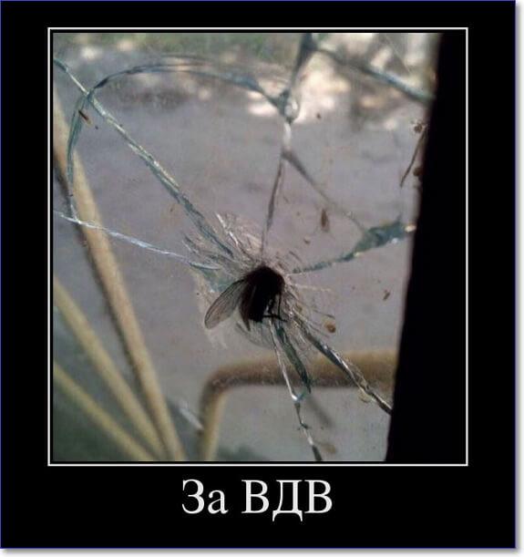 отличаются небольшой демотиватор мухи с одного большую разницу возрасте