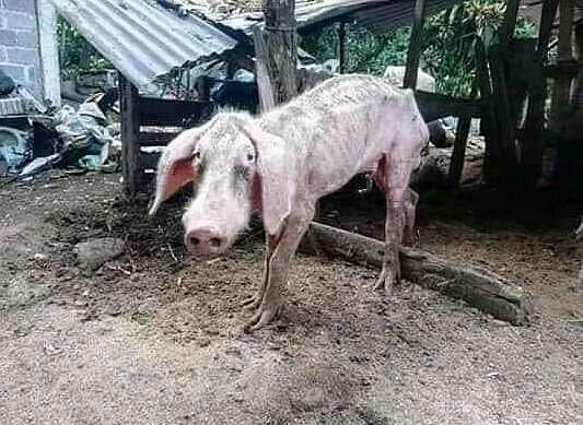 Как приготовить стейк из свинины фото рецепт вдохновило абхишека