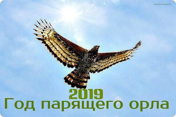 2019-й: Свинья или Орёл?