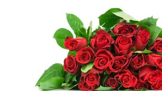 Эротика цветы любви, парень на коленях сосет член