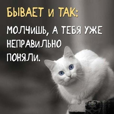 https://i.mycdn.me/image?id=881715318070&t=0&plc=WEB&tkn=*TIO3roaP6Hnprpdx0QPcfh6saiQ