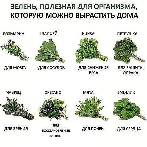 В-О-В-А, 35, Petropavl
