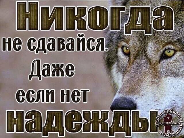 Dimon, 27, Kursk