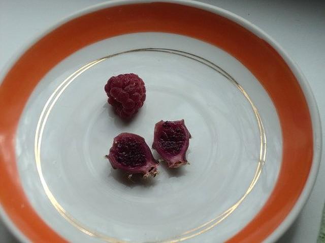Плоды домашнего кактуса