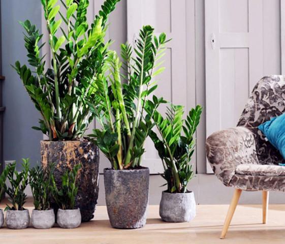 Картинки по запросу Зеленые экстремалы 10 неубиваемых растений для вашего дома