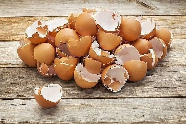 Картинки по запросу Как и в каком виде можно использовать яичную скорлупу на даче? 3 полезных совета