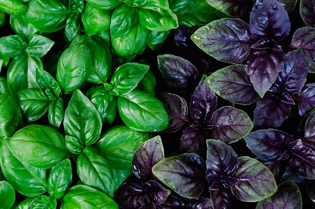 Тайны растений
