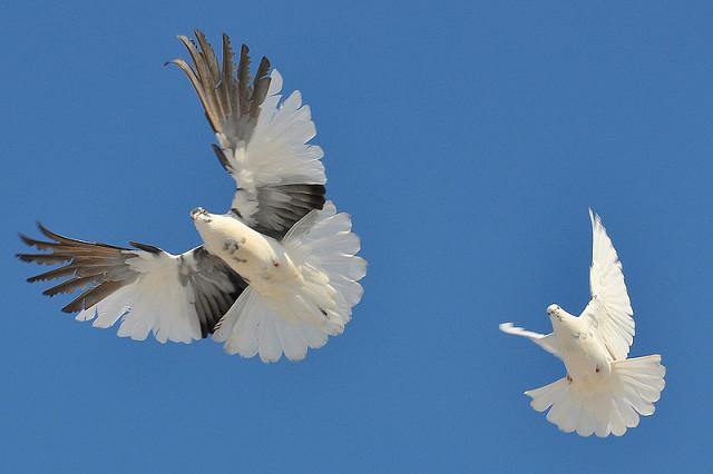Стихи о голубях Image?t=0&bid=849908434811&id=849310793339&plc=WEB&tkn=*pYPOAder6DBEv7WKjqdySSgJ6u4