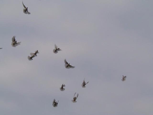 Стихи о голубях Image?t=0&bid=849908598139&id=849908598139&plc=WEB&tkn=*n3AHG0Rdotdm55eg0Bw60nJgmek
