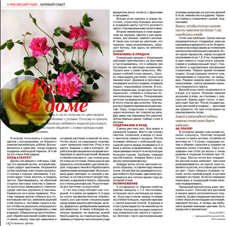 комнатная роза Image?t=3&bid=587871108124&id=587871108124&plc=WEB&tkn=*637sW6-ZiwdMgDoq6r9fZk6d170