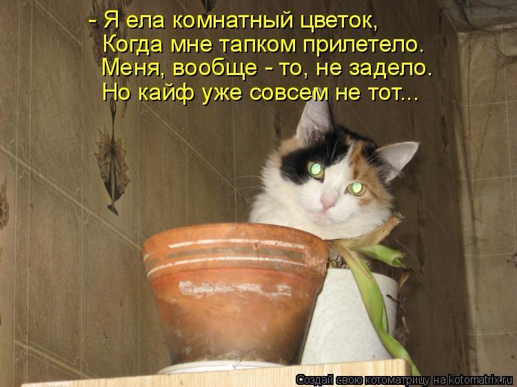 коты и цветы - Страница 2 Image?t=3&bid=838330704325&id=838330704325&plc=WEB&tkn=*kONDJ5ci4QSl4ZRbzdEmxfK5XF8