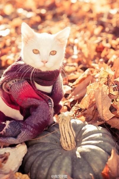 Картинки по запросу Теплые осенние котики